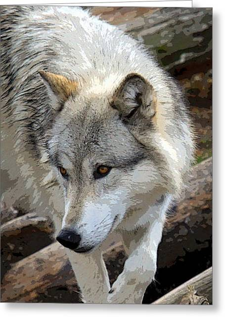 Award Winning Art Greeting Cards - Prowling Wolf  Greeting Card by Steve McKinzie