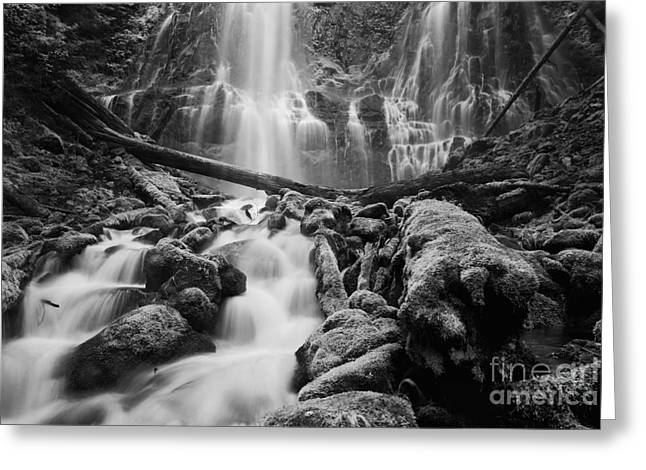 Black And White Waterfall Greeting Cards - Proxy Falls Greeting Card by Keith Kapple