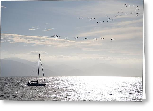 Free Of Peace Greeting Cards - Puerto Vallarta, Mexico Sailboat With Greeting Card by Keith Levit