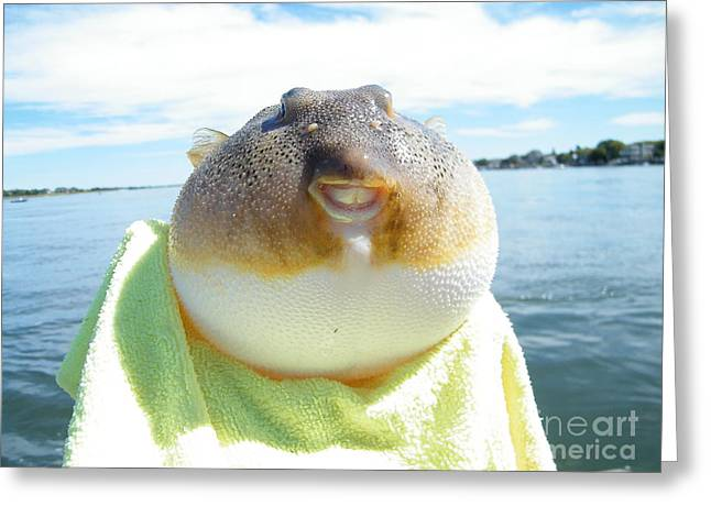 Puffer Greeting Cards - Puffer Smile Greeting Card by Laurence Oliver