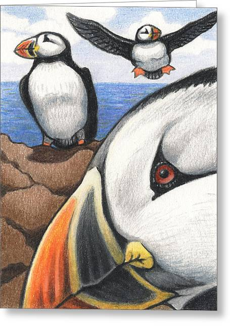 Sea Birds Drawings Greeting Cards - Puffins Greeting Card by Amy S Turner