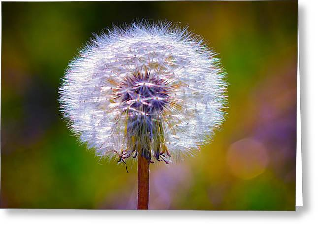 Dandelion Digital Art Greeting Cards - Puffy Dandelion on Pastels Greeting Card by Bill Tiepelman