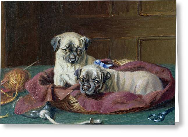 Dogs. Pugs Greeting Cards - Pug Puppies in a Basket Greeting Card by  Horatio Henry Couldery