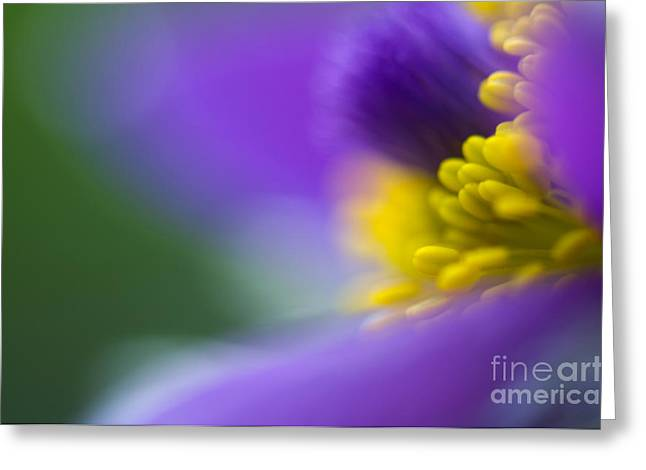 Yellow Flowers Greeting Cards - Pulsatilla Greeting Card by Silke Magino