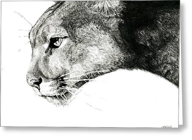 Meditate Drawings Greeting Cards - Puma  Greeting Card by Ian Tullock
