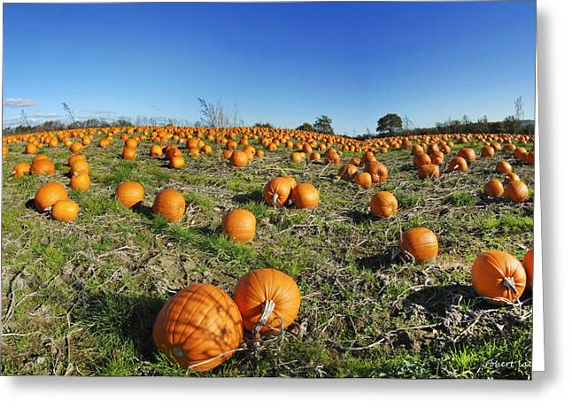 Fyn Greeting Cards - Pumpkin Field Greeting Card by Robert Lacy
