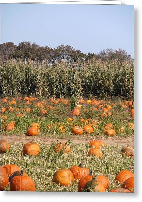 North Fork Greeting Cards - Pumpkin Patch Greeting Card by Kimberly Perry