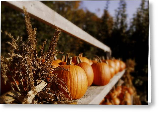 Farm Stand Greeting Cards - Pumpkins Aglow Greeting Card by Christine Tuck