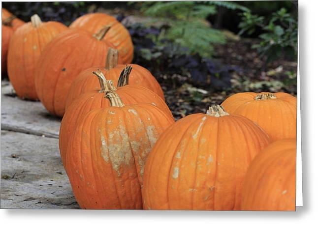 Dallas Arboretum Greeting Cards - Pumpkins Galore V2 Greeting Card by Douglas Barnard