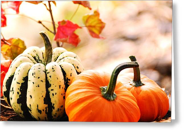 Fall Grass Greeting Cards - Pumpkins Greeting Card by HD Connelly