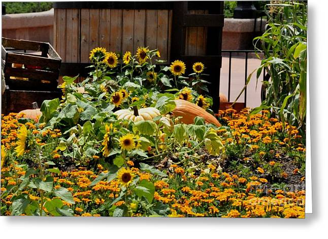 Sunflower Patch Greeting Cards - Pumplin Patch Greeting Card by John Black