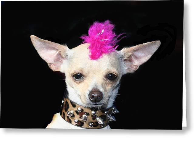 Punk Rock Chihuahua Greeting Card by RITMO BOXER DESIGNS
