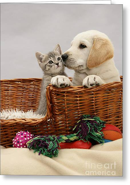 Recently Sold -  - Mixed Labrador Retriever Greeting Cards - Pup And Kitten In Basket Greeting Card by Jane Burton