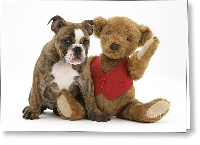 Brindle Greeting Cards - Pup And Teddy Bear Greeting Card by Jane Burton