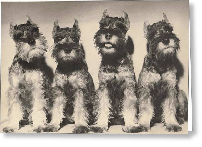 Pat Mchale Greeting Cards - Puppies All In A Row Greeting Card by Pat Mchale