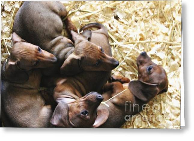 Puppies Greeting Card by Brian  Seidenfrau