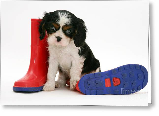 Puppies With A Childs Rain Boots Greeting Card by Jane Burton