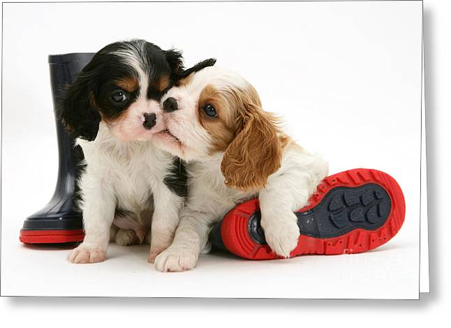 Wellie Greeting Cards - Puppies With Rain Boots Greeting Card by Jane Burton