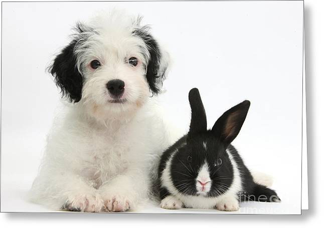 Mixed Species Greeting Cards - Puppy And Baby Rabbit Greeting Card by Mark Taylor