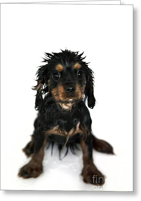 Puppies Photographs Greeting Cards - Puppy bathtime Greeting Card by Jane Rix