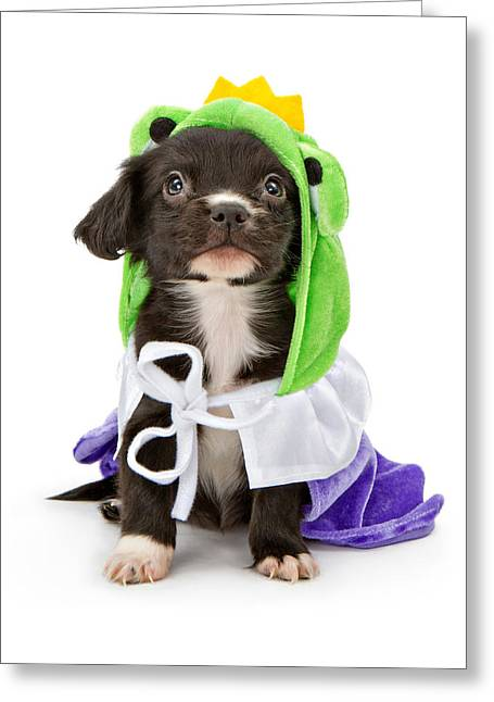 Tiny Photographs Greeting Cards - Puppy Frog Prince Greeting Card by Susan  Schmitz