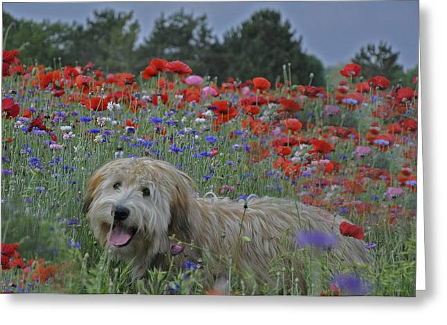 Puppies Photographs Greeting Cards - Puppy in Poppy Field Greeting Card by Vijay Sharon Govender
