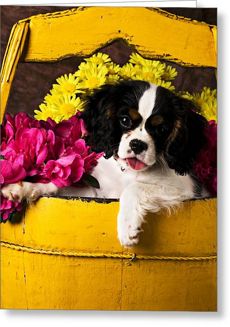 Domesticated Flower Greeting Cards - Puppy in yellow bucket  Greeting Card by Garry Gay