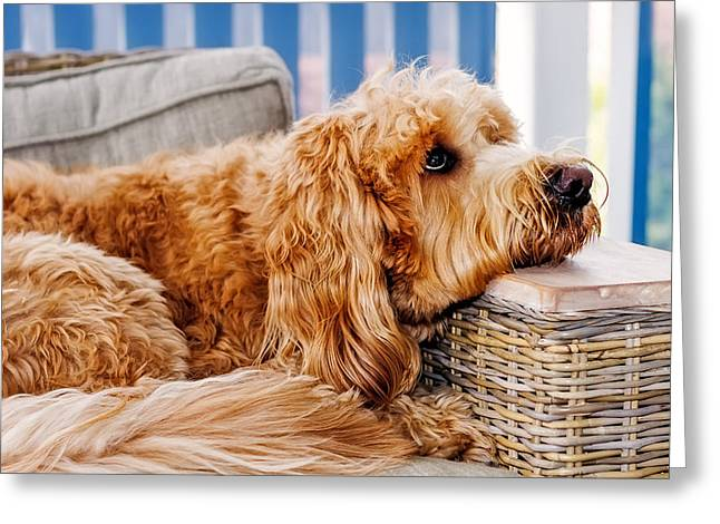 Dog On Couch Greeting Cards - Puppy Luv Greeting Card by Mark Lucey