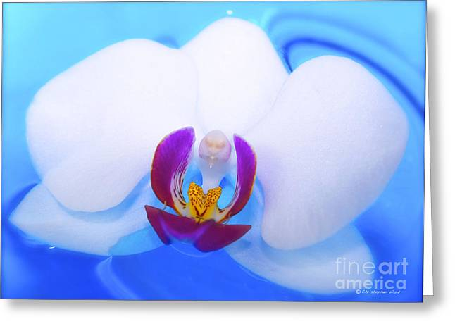 Print On Canvas Photographs Greeting Cards - Pure White Orchid Greeting Card by Christopher  Ward