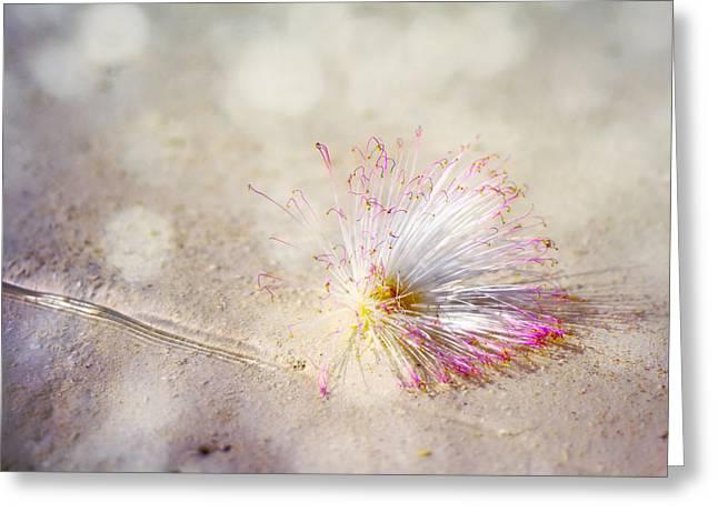 Purity Greeting Card by Jenny Rainbow