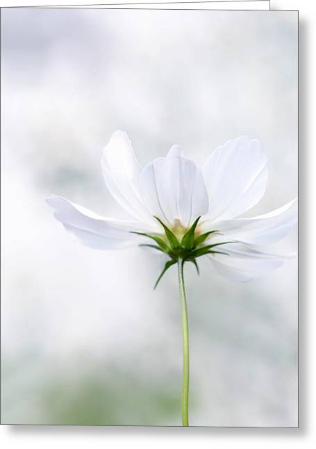 Floral Artwork Greeting Cards - Purity Greeting Card by Renee Dawson