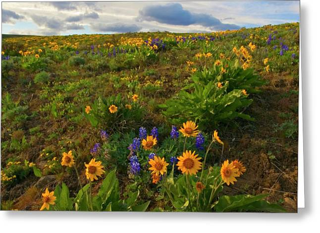 Purple and  Gold Greeting Card by Mike  Dawson