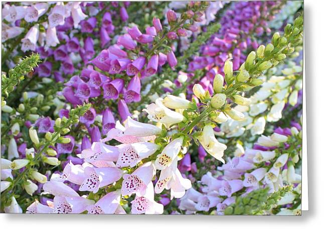 Foxglove Flowers Greeting Cards - Purple and White Foxglove Square Greeting Card by Carol Groenen