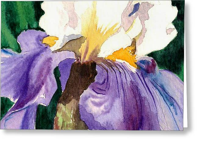 Purple and White Iris Greeting Card by Janis Grau