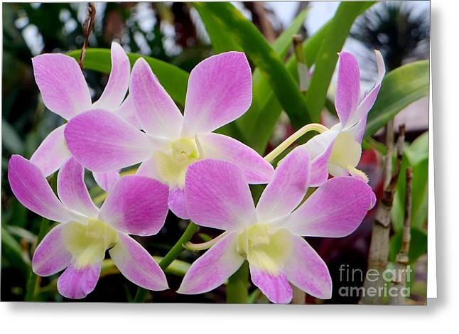 Purple Balinese Flower Greeting Card by Samantha Mills
