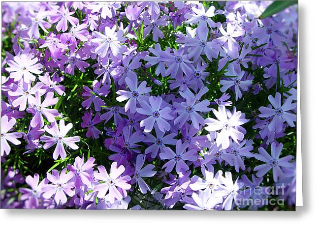 Thanh Tran Greeting Cards - Purple Bed Greeting Card by Thanh Tran