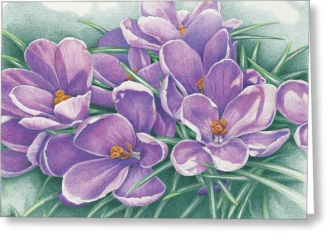 Crocus Greeting Cards - Purple Crocus Greeting Card by Amy S Turner