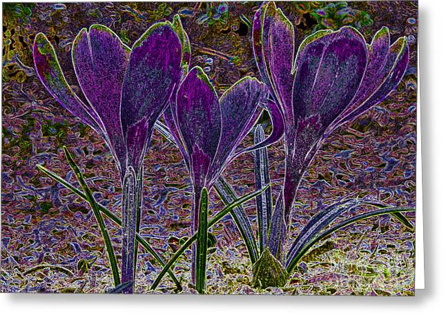 Tone Mapped Greeting Cards - Purple Crocuses  Greeting Card by Sharon  Talson