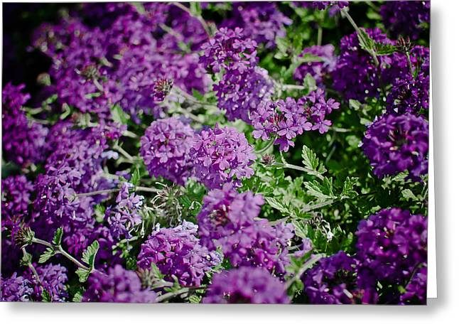 Swift Family Greeting Cards - Purple Dream Greeting Card by Swift Family