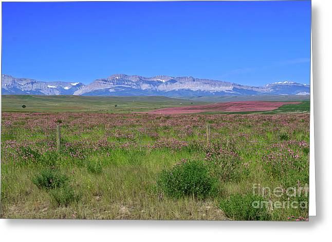 Montana Landscapes Photographs Greeting Cards - Purple fields in Montana Greeting Card by Louise Heusinkveld
