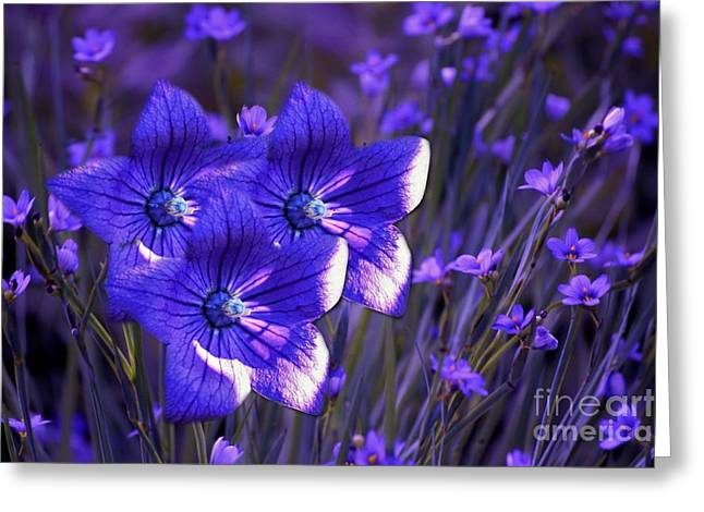 Balloon Flower Greeting Cards - Purple Florwer Abstract Greeting Card by Marjorie Imbeau