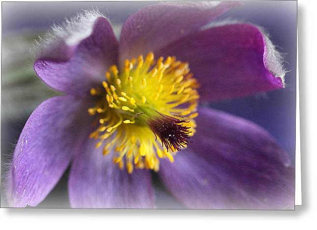 Purple Flower Frosted Greeting Card by Mark J Seefeldt