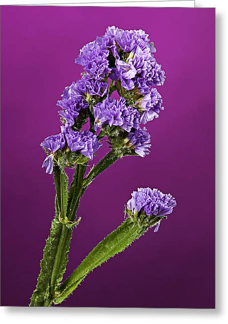 Flowers Stretched Prints Greeting Cards - Purple Flower Greeting Card by M K  Miller