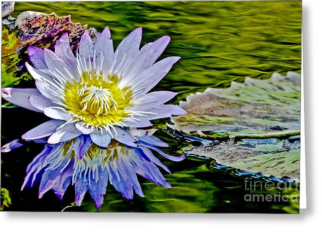 Nature Center Pond Greeting Cards - Purple Flower Water Lily Greeting Card by Carol F Austin