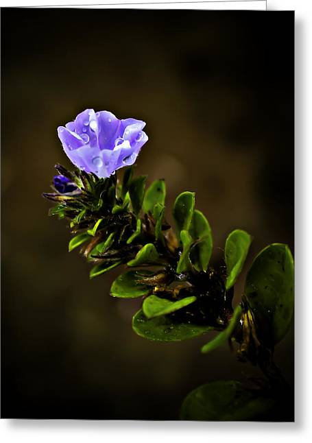 Purlple Greeting Cards - Purple Flower with Rain Drops Greeting Card by Mr
