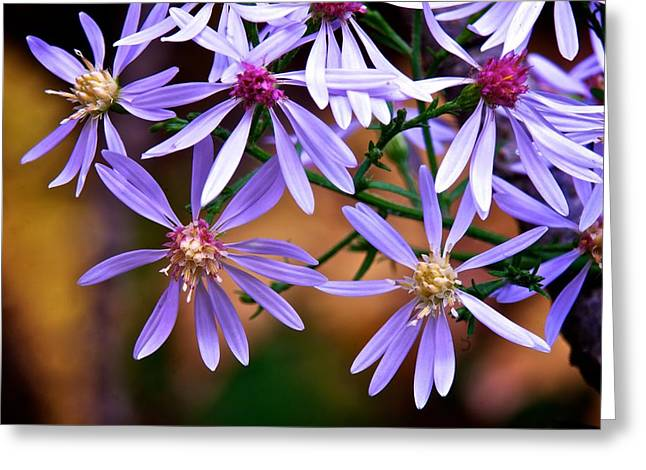 Purple Flowers Greeting Card by Andre Faubert