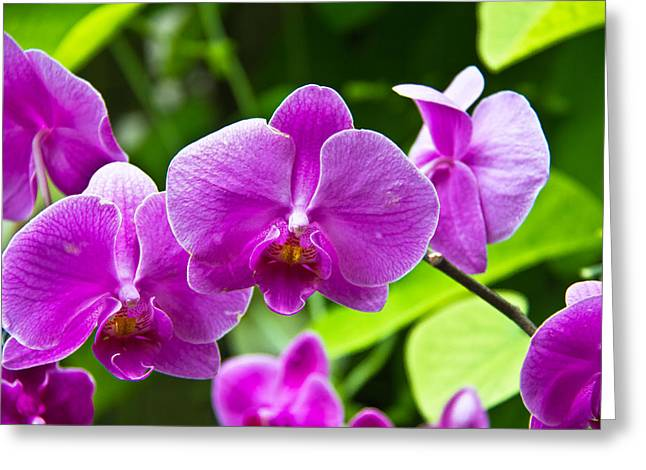 Darren Greeting Cards - Purple Flowers In A Bunch Greeting Card by Darren Langlois