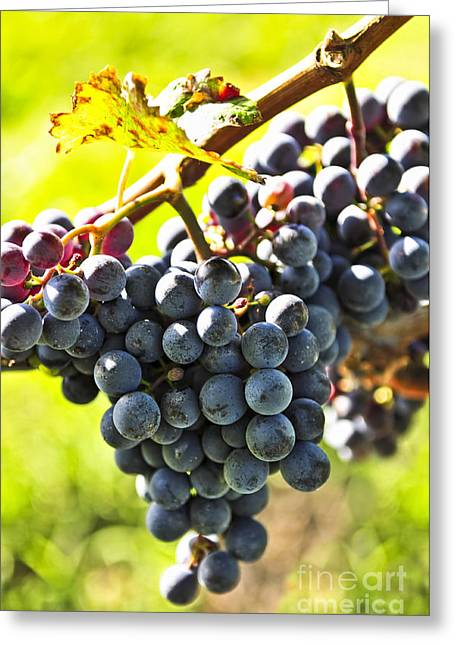 Purple Grapes Photographs Greeting Cards - Purple grapes Greeting Card by Elena Elisseeva