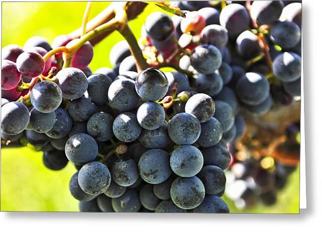 Purple grapes Greeting Card by Elena Elisseeva
