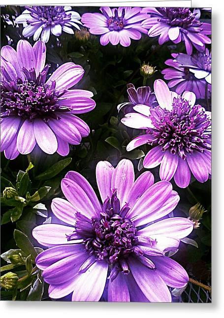 Purple Haze Greeting Card by Kevin D Davis